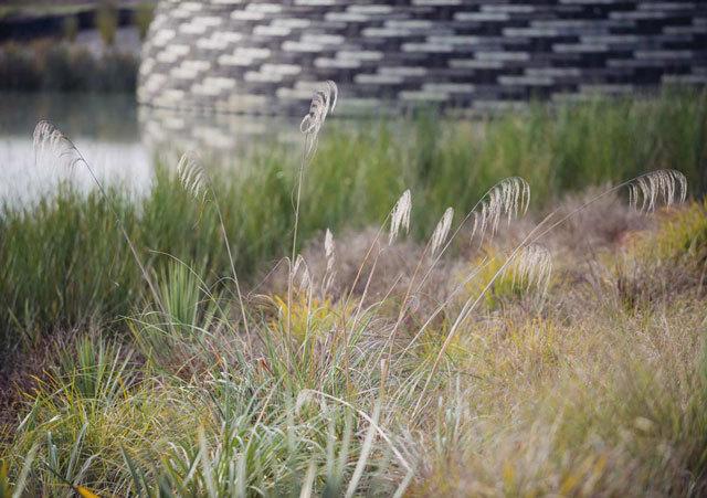 新西兰Kopupaka湿地公园景观设计_8