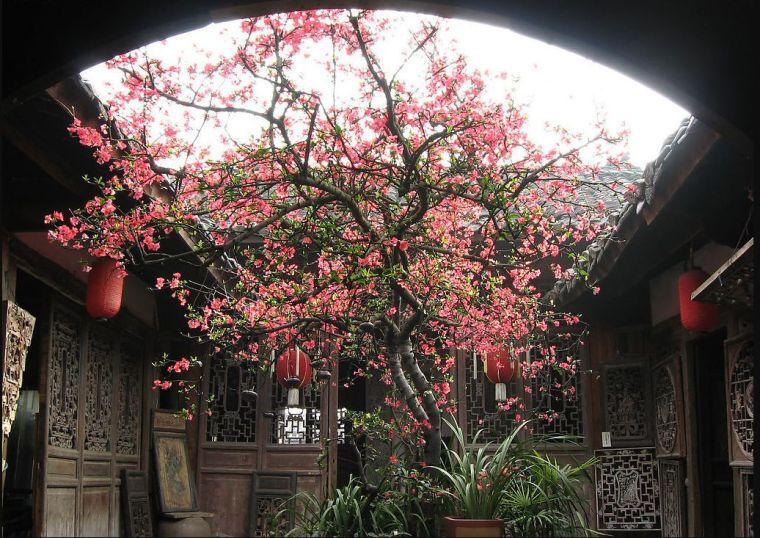 灵气之源·中式庭院主景树一览_8