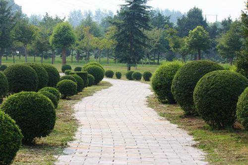 园林绿化工程施工进度计划(附表格)