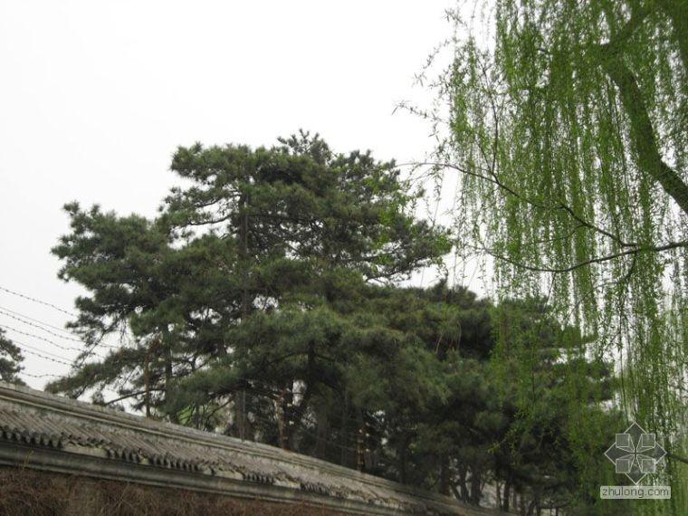 近景树_1