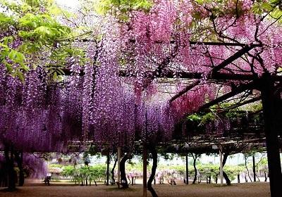 香花植物-嗅觉盛宴_7