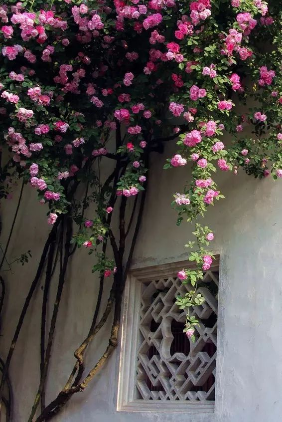 花窗之美,穿越千年而来_7