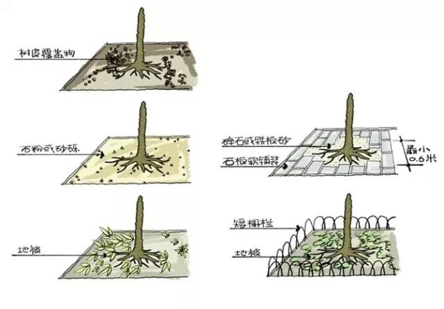 种植秘诀·图解园林景观之乔木种植技术-640.webp (5).jpg