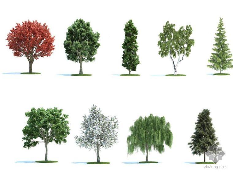 PS后期素材(树木)