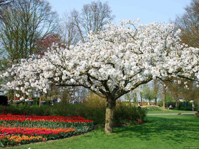 外国的园林艺术一定要看!_10