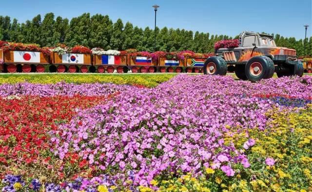 迪拜的花卉展览,全世界规模最大!你肯定没看过!_25