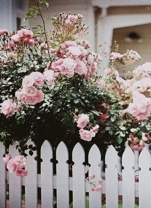 世界那么大,我却只想要个小院花开满园,自在从容……_7