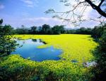 【云南】昆明环滇池湖滨生态带概念规划设计|EDWA