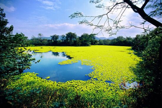 [云南]昆明环滇池湖滨生态带概念规划设计|EDWA