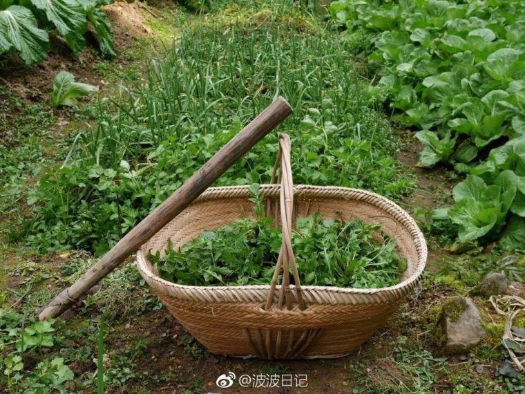 老了,我想和你有个菜园子。_7