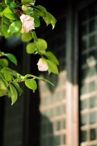 花窗之美,穿越千年而来_10