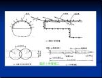 公路隧道施工安全PPT培训讲义(289页)