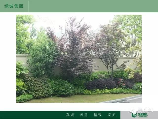 干货|绿城精致景观营造工艺工法篇倾情呈现-20160518_104945_112.jpg