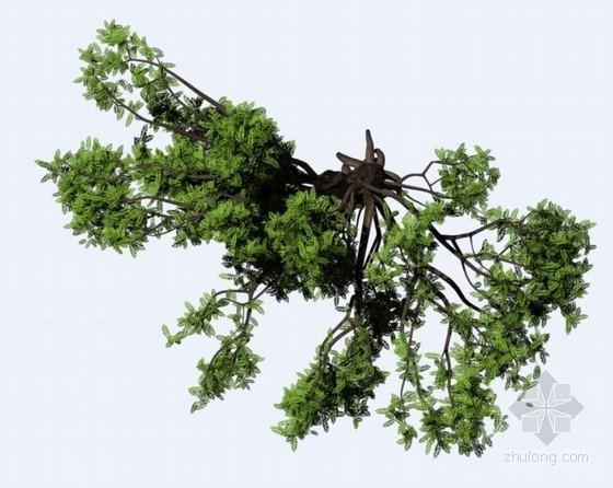 俯视的树木PSD素材