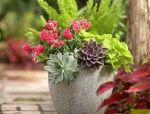 花钵,承载美丽的移动花园!