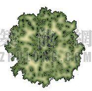 平面彩图树21