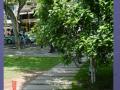 园林景观工程质量控制要点及质量通病防治措施
