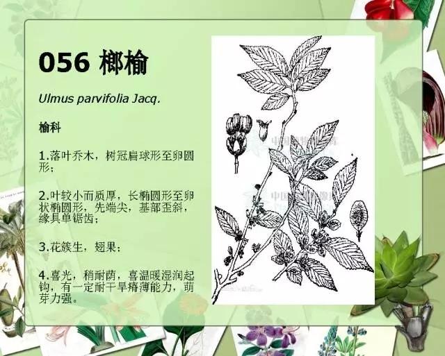 100种常见园林植物图鉴-20160523_183224_057.jpg