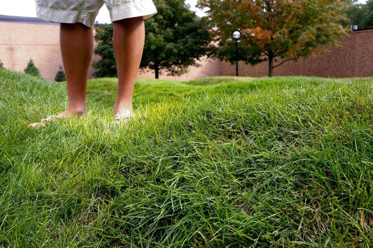 美国绿色波形草坪-4