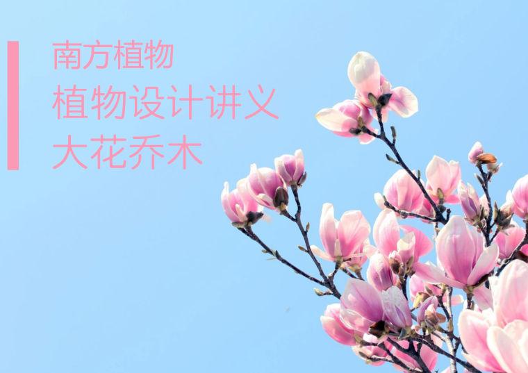 [植物讲义]南方常见植物-大花乔木