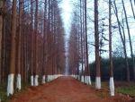 树阵景观的植物配置要点