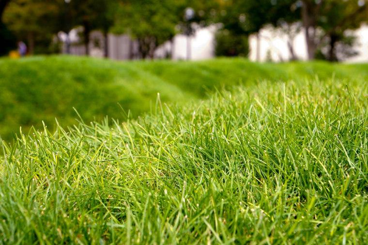 美国绿色波形草坪-6