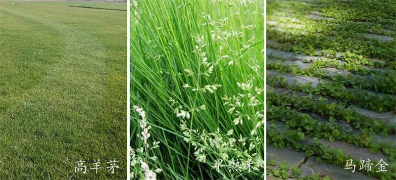 植物造景·实用景观设计来一波_40