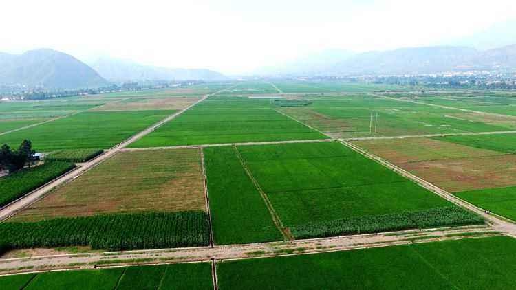 高标准基本农田建设项目监理大纲