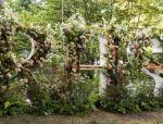 植物的力量 这个5月,切尔西花展的魔力秀你看过了吗?