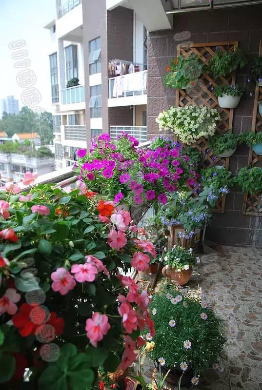 想要这样一个阳台,过小日子,看花开_7