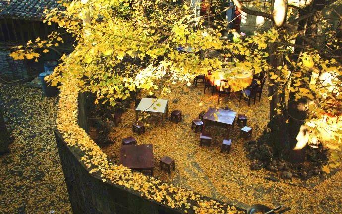 这才是中国人的院子,秋天美到骨子里_32