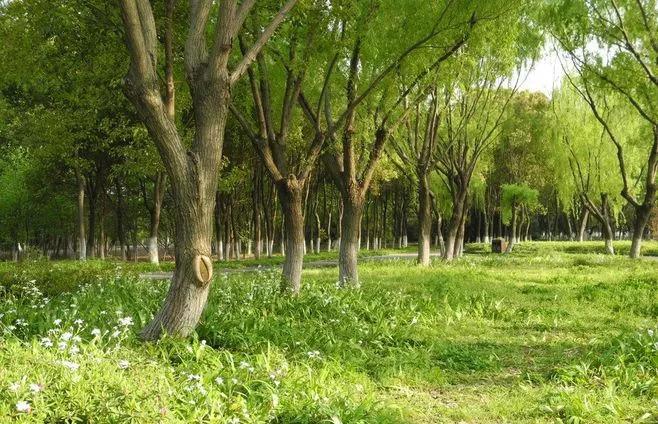 实用 景观植物设计方法(图文解析,值得收藏)_18