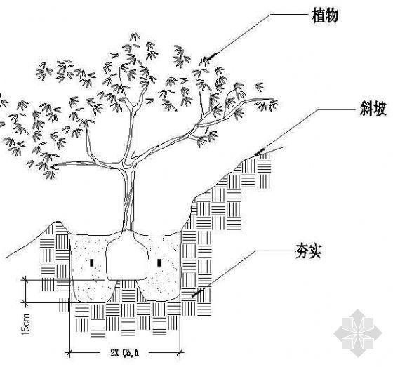 坡地植物栽植详图