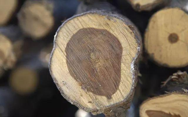 古典园林常用木材解析_6