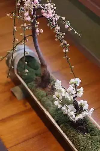 绿植这样摆,你家比园林还要美!_19
