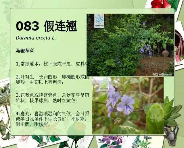 100种常见园林植物图鉴-20160523_183224_108.jpg