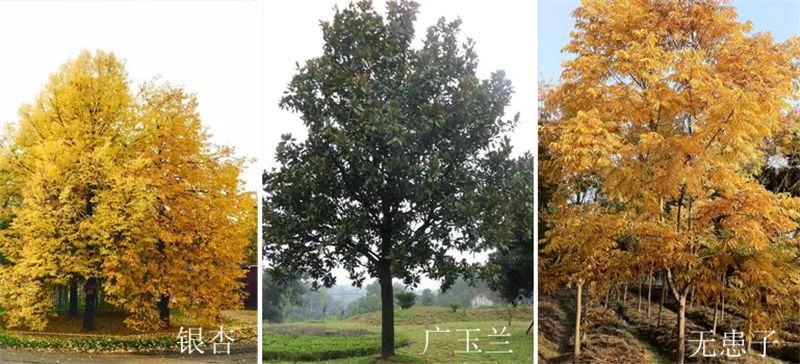 植物造景·实用景观设计来一波_35