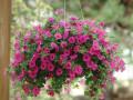 十种适合上海庭院种植的花,让你的庭院变得不一样