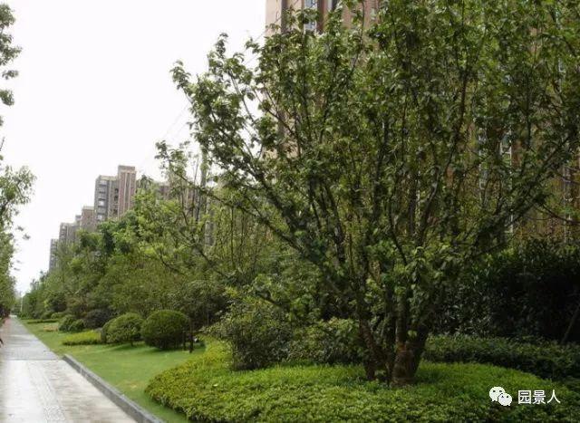 城市干道植物配置,实用干货不得不看!_18