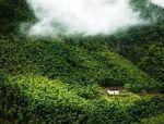 有多少人过惯城市生活 想隐居山林的?