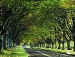 树阵景观 · 规则中暗藏玄机