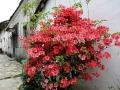 花境的认识及理解,花境植物配置设计说明(案例)