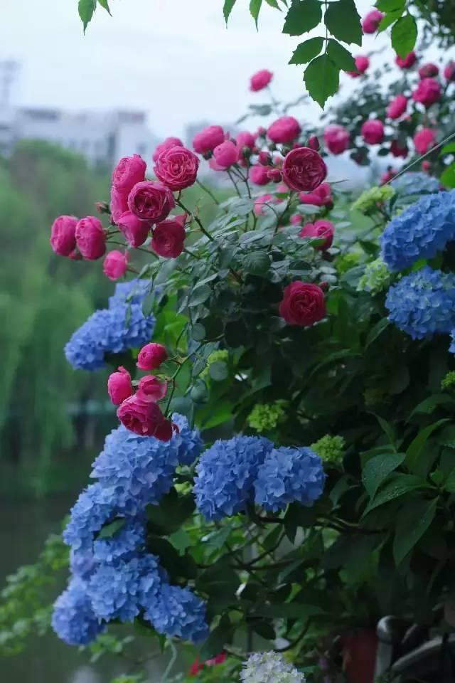 想要这样一个阳台,过小日子,看花开_1