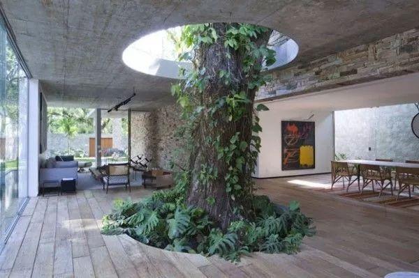 当你的房子里有一颗树_1