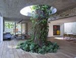 当你的房子里有一颗树