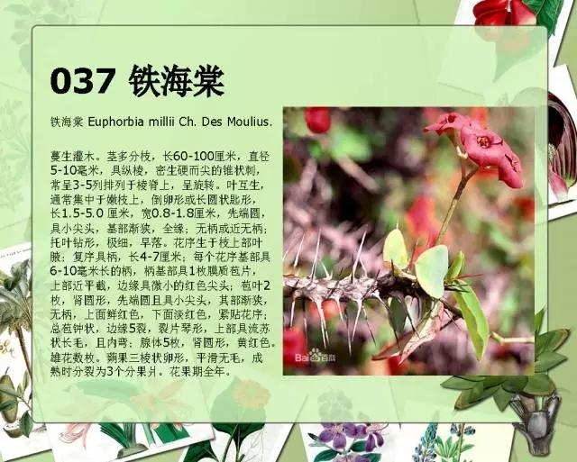 100种常见园林植物图鉴-20160523_183224_041.jpg