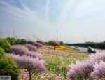 [湖北]生态大尺度空间立体匝道道路街区绿化景观改造设计方案(2017最新)