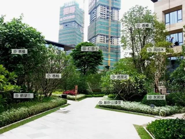 最详细图解:深圳湾三大豪宅景观植物配置!_8