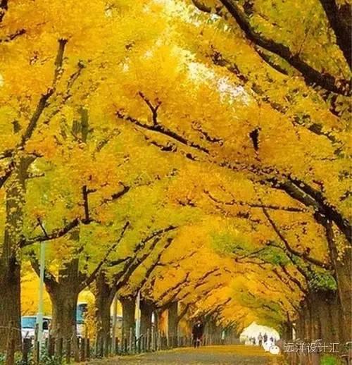 一个会种树的设计师,住宅每平方溢价3000元_19