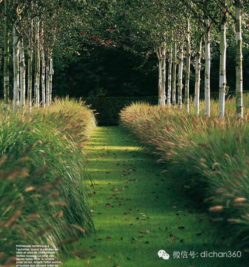 """""""无草不成园""""营造园林景观低成本价值美_10"""